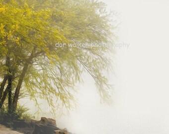Tree in mist, mustard yellow leaves on light gray fog, woodland, minimalist nature art, for couples, outdoor lover, peaceful art, loft decor