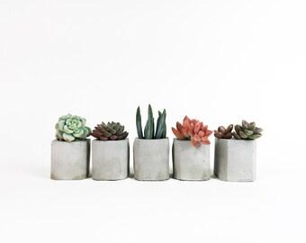 Gift Set of 5 - Mini Concrete Beveled Square Planter - Concrete Vessel - Concrete Vase - Beveled Edge