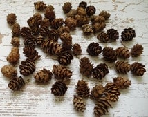 Natural Pine Cones, Mini Pine Cones, 100 TINY Pine Cones, Wooden Pine Cones - Miniature Pine Cones - Miniature Real Pine Cones
