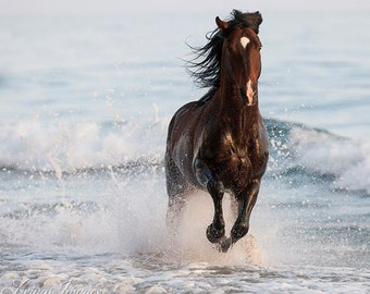 Stallion Leaps in the Surf - Fine Art Horse Photograph - Horse - Andalusian - Fine Art Print