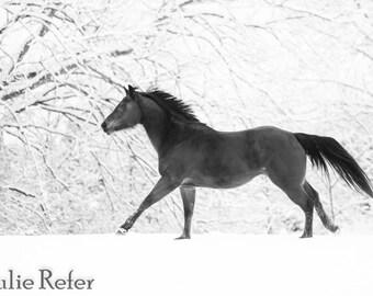 Horse Photography Horse Art Black and White Horse Photo