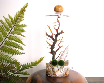 Marimo Terrarium: Marimo Moss Ball Aquarium, Slender Vase with Wood Ball- Several Different Colors Available