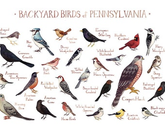 backyard birds of pennsylvania field guide style watercolor painting
