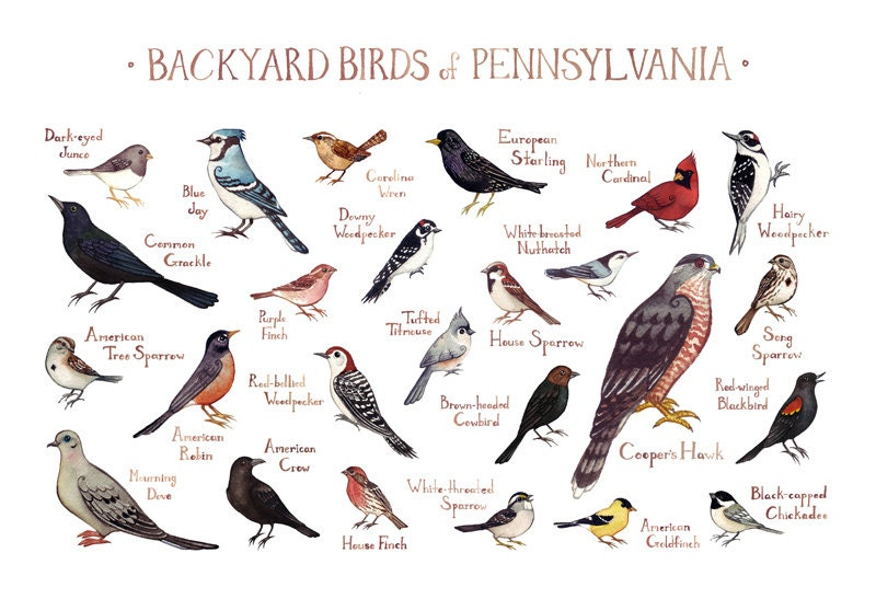 how to call birds to the backyard