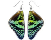 Real Butterfly Wing Earrings - Sunset Moth Top Butterfly Wing Jewelry