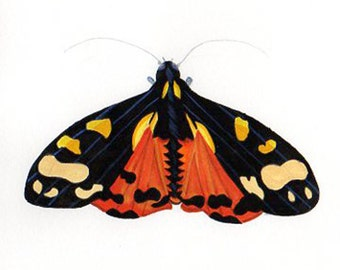 Tiger Moth Insect Specimen Print. Taken from my Original Watercolor Entomology Drawing. Tiger Moth Specimen Hand Drawn and Hand Painted.