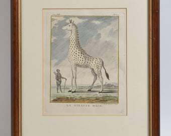 Antique Animal Engraving Hand Colored Print LA GIRAFFE Male ca1772 BUFFON Natural History