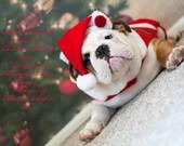 5 x 7 English Bulldog  Puppy Christmas Card