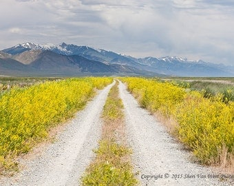 Nevada Landscape Photography, Ruby Valley National Wildlife Refuge, Spring Wildflowers - Photographic Fine Art Print