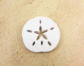 Sand Dollar Paper Cut Outs set of 25