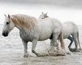 HERCULES - Camargue Stallion and follower,  Equine Photography, Romance, Nautical Beach, Wall Decor, Neutral, Horse Art Print