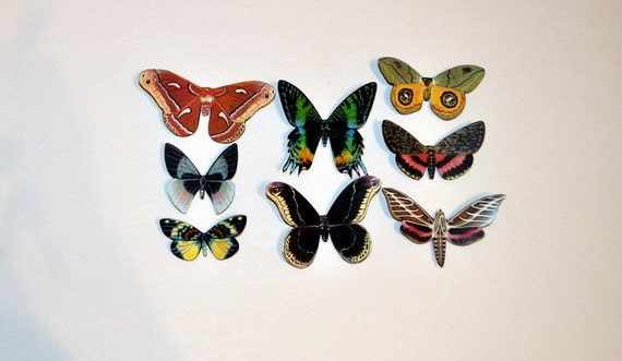 Butterfly Moth Magnets Set of 8 Insects Refrigerator Magnets Handmade by Doug Walpus