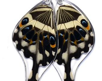 Real Central Emperor Swallowtail Butterfly (Papilio lormieri) (bottom/rear wings) earrings
