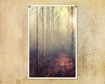 Landscape Photograph Trees Misty Foggy Ethereal Forest Art Print