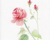 Rose painting, watercolor flower original, garden-lovers gift