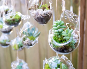 Wedding Favor Hanging Terrarium Blown Glass 20