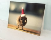 Christmas Card Chicken in A Santa Hat Chicks in Hat Baby Animal Photography Holiday