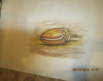 PASTEL DRAWING of SHELLS by Artist Salvatore Fierro
