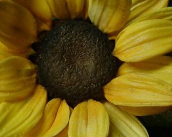 Stunning Sugar Gum paste Sunflower