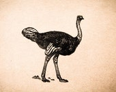 "Ostrich Rubber Stamp - 2""x2"""