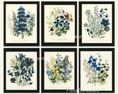 BOTANICAL Print SET of 6 Art Print 8X10 Loudon Antique Blue Delphinium Campanula Flower Chart Summer Plant Nature to Frame Home Decor Garden