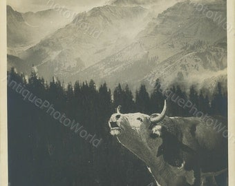 Cow mooing in mountains antique art photo montage
