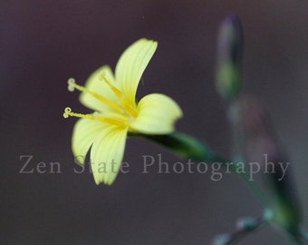 Yellow Flower Photography Print. Macro Photography. Yellow Flower Wall Art. Unframed Photo Print, Framed Photography, or Canvas Print.