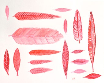 Red Feather Collection, Original feather watercolor painting, Red Minimalist, Natural History, Bird Feathers, Watercolor & Gouache painting