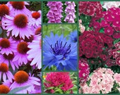 Old Timey Collection - 5 Pack Special - Heirloom Flower Seeds, Non-GMO Flower Seeds, Heirloom Coneflowers, Sweet Williams, Foxglove Seeds!