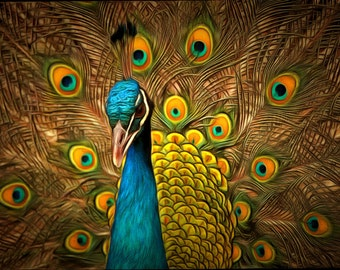 Male Peacock in all his Royal Glory Photo Image Unframed