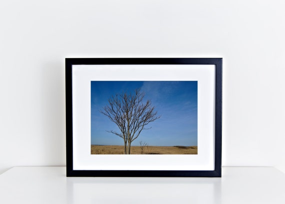 The Beach Tree // tree on sand dunes, beach photography, beach tree, plum island, blue sky, beach home decor, beach photography