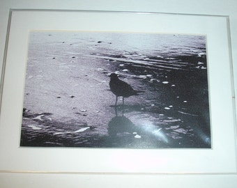 Limited Edition Digital Bird on Pacific Coast Shore Matted Print #1