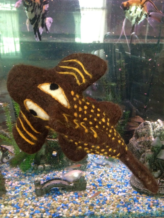 Items similar to needle felted pleco sucker fish on etsy for Sucker fish pictures