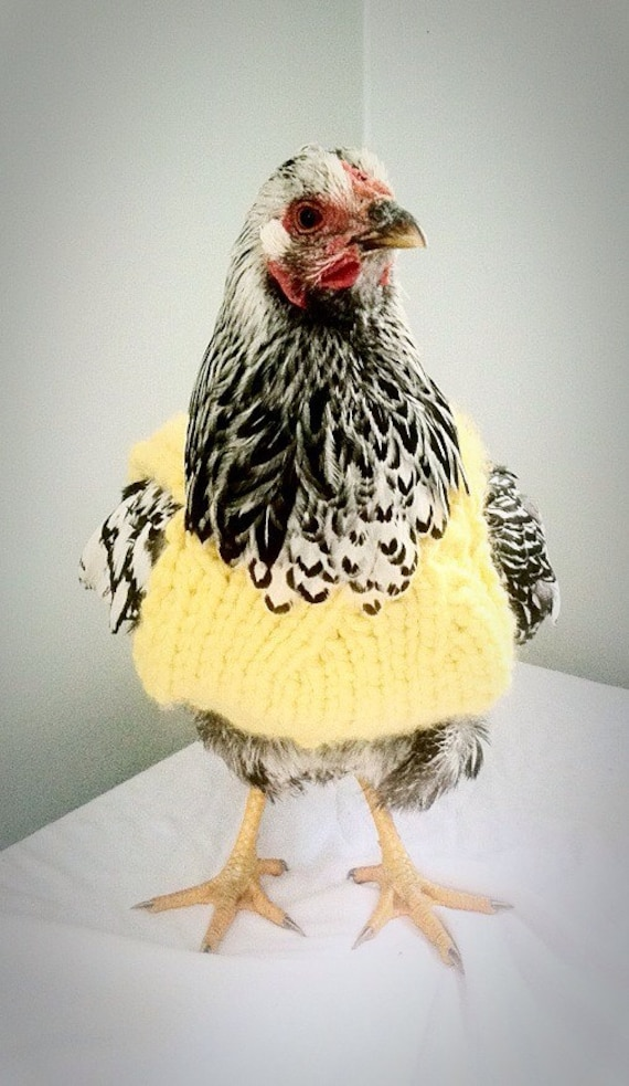 Chicken Sweater Sweater for Chickens and Hens Sweater by PaulFarm