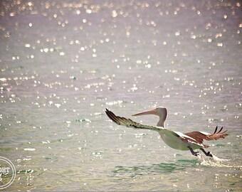 Pelican Photography, Australia Beach Photos, Fine Art photography, Pelican Photos, Australia, Sea Photography, Bird Beach photos,Sea Glimmer