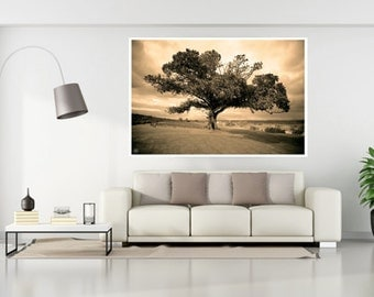 Tree Photography, Nature Photography, Large Tree Prints, Fig Tree, Large Tree Photos, Antique Style Tree Photo,Australian Flora Tree Art