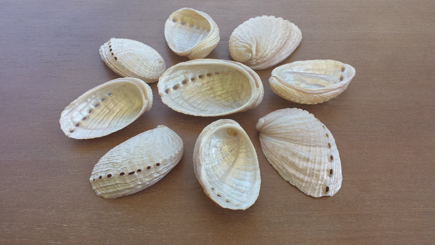 Abalone shells beach decor seashells shells home decor for Shells decorations home
