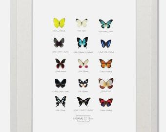 Butterfly Species - Fine Art Giclee Print