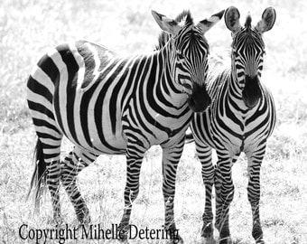 Zebra Pair, Digital Photography, Black and White Photography, Zebra Decor, Zebra Art, Zebra Photography, Animal Love, Zebra Love, Safari Art