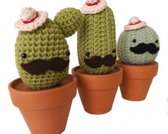 Panchito Cactus