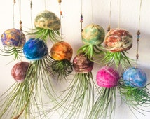 Wholesale Air Plants in Handmade Felted Hanging Wool Bowl Terrariums Lot of 10 (Lowest Priced)