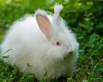 White Rabbit, Easter Bunny, Cottontail Rabbit, Nursery Decor, Cute Animal