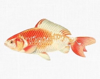 Goldfish Antique Image - Shukin Goldfish - Japanese Fish Digital Clip Art for Transfers, Prints, Decoupage, Collages, Invitations, Cards...