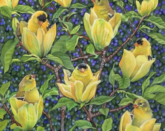 In Bloom (framed art print from watercolour of goldfinches in a 'yellow bird' magnolia tree by Cori Lee Marvin)