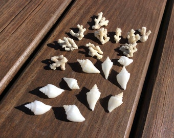 small coral and conch shell assortment (10 of each)