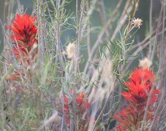 Flower Photography, Bohemian Art, Red Indian Paintbrush Photo, Spring Desert Wildflowers Art