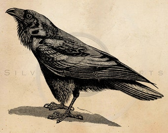 Vintage Raven Crow Illustration Printable 1800s Antique Birds Print Instant Download Digital Image Clip Art Retro Black & White Drawing