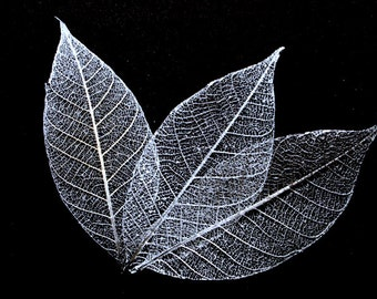 Silver Skeleton Leaves