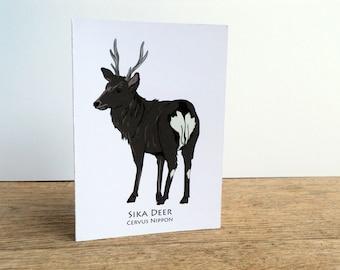 Sika Deer Card