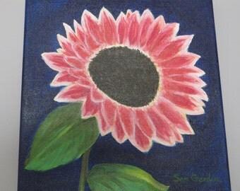 Pink Sun Flower with Dark Blue Background, 12 x12 in. Original Painting